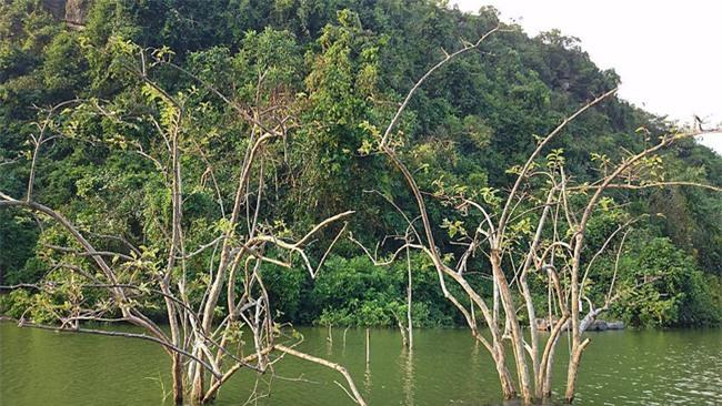 4 điểm du lịch cực nên thơ, đi mãi đi hoài vẫn không hết cảnh đẹp ở Ninh Bình - Ảnh 13.