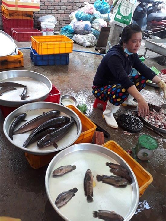 Trung Quốc, thu mua, cá đồng, cá nuôi, phân biệt,
