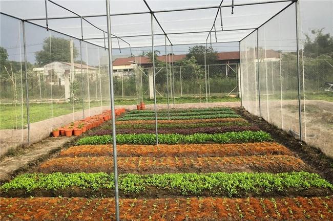 mua đất trồng rau, trang trại mini, bán đất phân lô, đất trồng rau phân lô, đại gia, trồng rau sạch