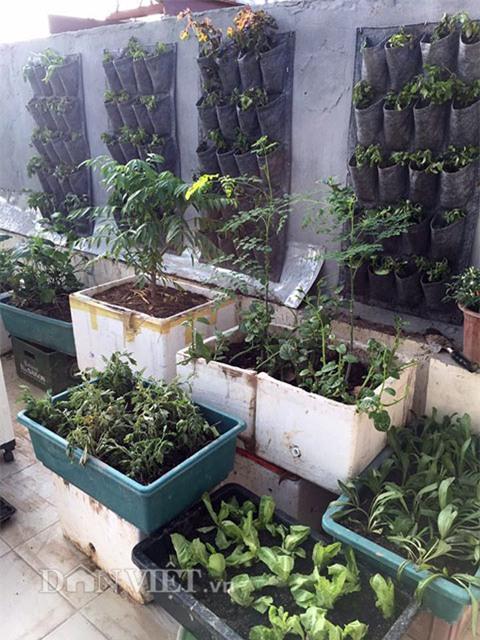 vườn rau, rau sạch, trồng rau, trồng rau sạch, nông dân,