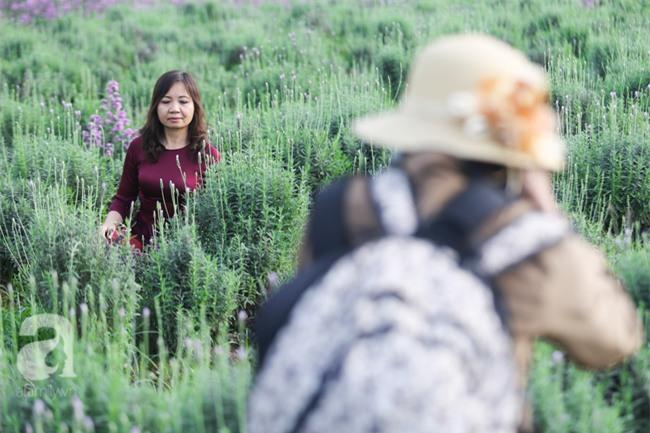 Không cần đi Tây, ở ngay Hà Nội cũng có vườn lavender tím rực khiến chị em ngất ngây - Ảnh 10.