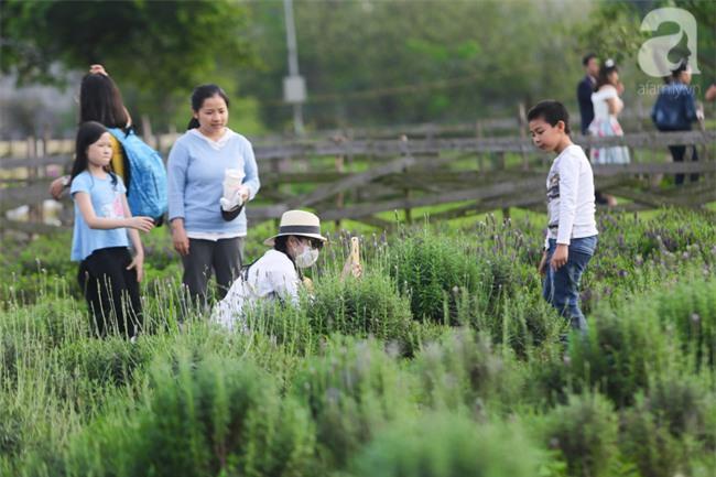 Không cần đi Tây, ở ngay Hà Nội cũng có vườn lavender tím rực khiến chị em ngất ngây - Ảnh 3.