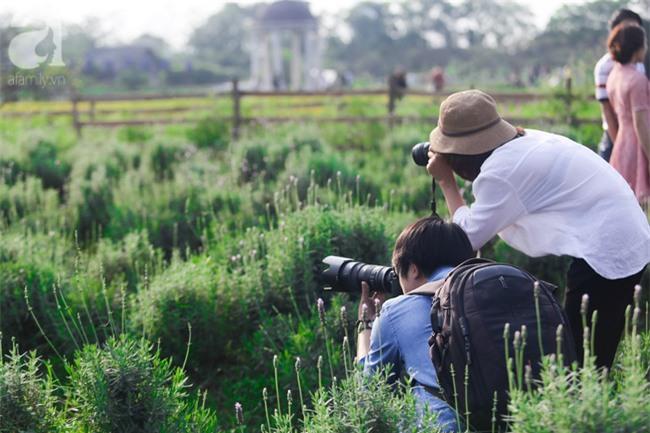 Không cần đi Tây, ở ngay Hà Nội cũng có vườn lavender tím rực khiến chị em ngất ngây - Ảnh 8.