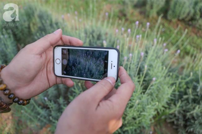 Không cần đi Tây, ở ngay Hà Nội cũng có vườn lavender tím rực khiến chị em ngất ngây - Ảnh 9.