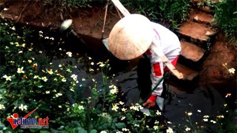 Hà Nội: Tưới rau sống bằng nước thải đen ngòm - Ảnh 4.