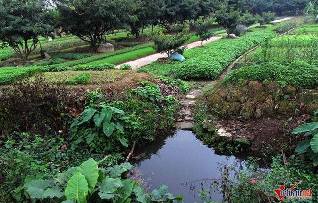 Hà Nội: Tưới rau sống bằng nước thải đen ngòm - Ảnh 6.