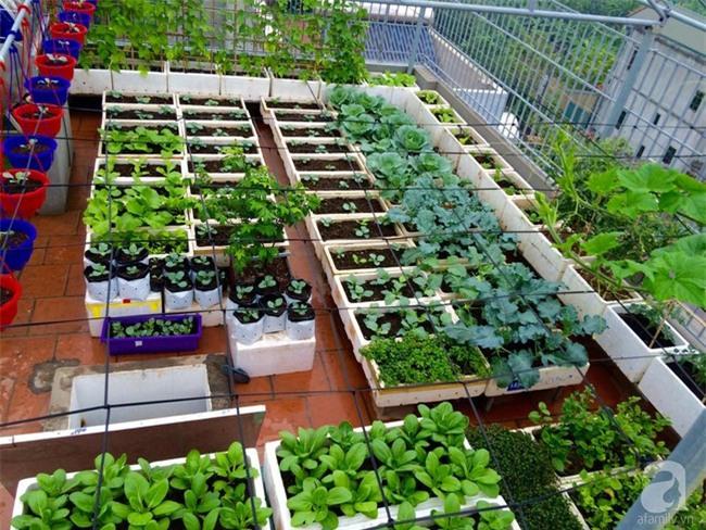 Đầu tư 30 triệu, ông bố 2 con sở hữu vườn rau trên sân thượng tươi đẹp bất ngờ giữa lòng thủ đô - Ảnh 1.