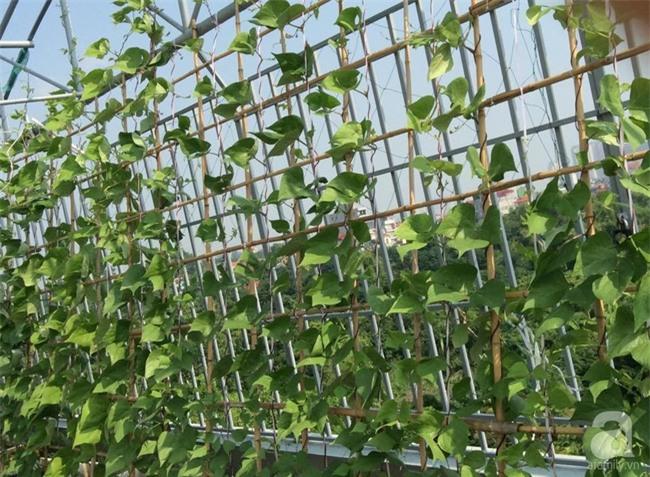 Đầu tư 30 triệu, ông bố 2 con sở hữu vườn rau trên sân thượng tươi đẹp bất ngờ giữa lòng thủ đô - Ảnh 11.