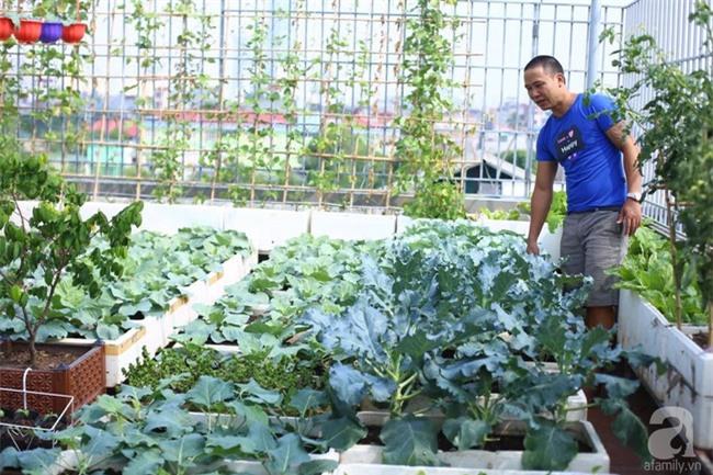 Đầu tư 30 triệu, ông bố 2 con sở hữu vườn rau trên sân thượng tươi đẹp bất ngờ giữa lòng thủ đô - Ảnh 2.