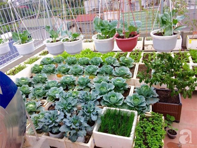 Đầu tư 30 triệu, ông bố 2 con sở hữu vườn rau trên sân thượng tươi đẹp bất ngờ giữa lòng thủ đô - Ảnh 3.