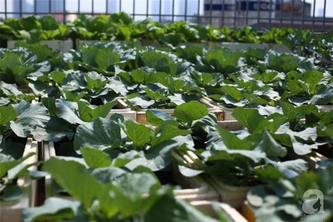 Đầu tư 30 triệu, ông bố 2 con sở hữu vườn rau trên sân thượng tươi đẹp bất ngờ giữa lòng thủ đô - Ảnh 6.