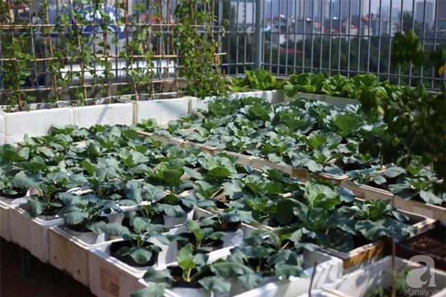 Đầu tư 30 triệu, ông bố 2 con sở hữu vườn rau trên sân thượng tươi đẹp bất ngờ giữa lòng thủ đô - Ảnh 7.