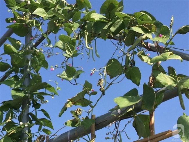 Đầu tư 30 triệu, ông bố 2 con sở hữu vườn rau trên sân thượng tươi đẹp bất ngờ giữa lòng thủ đô - Ảnh 9.