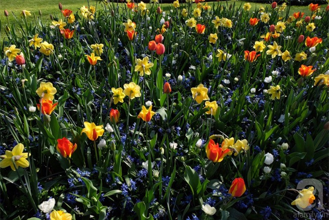 Lạc vào thiên đường hoa 7 triệu bông, một năm chỉ mở cửa một lần - Ảnh 11.