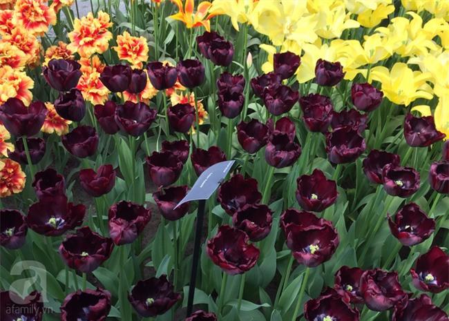 Lạc vào thiên đường hoa 7 triệu bông, một năm chỉ mở cửa một lần - Ảnh 15.
