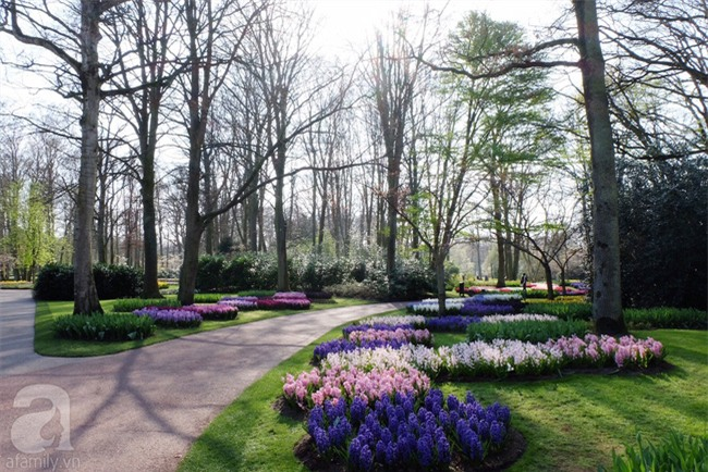Lạc vào thiên đường hoa 7 triệu bông, một năm chỉ mở cửa một lần - Ảnh 6.
