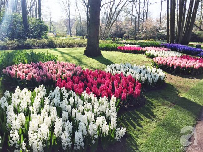 Lạc vào thiên đường hoa 7 triệu bông, một năm chỉ mở cửa một lần - Ảnh 7.