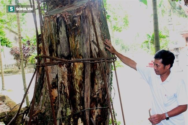 Đại gia chi 20,5 tỷ mua gỗ cây sưa ở Hà Nội: Gỗ bị bắt giữ, tiền thì phong tỏa - Ảnh 1.