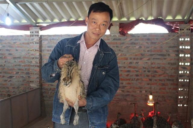 đà điểu, nuôi chim, nông dân, thu tiền tỷ,