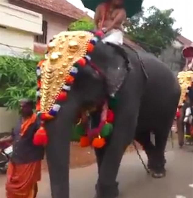 Cáu quá, chú voi giơ chân đá bay người đàn ông phía sau mình - Ảnh 3.