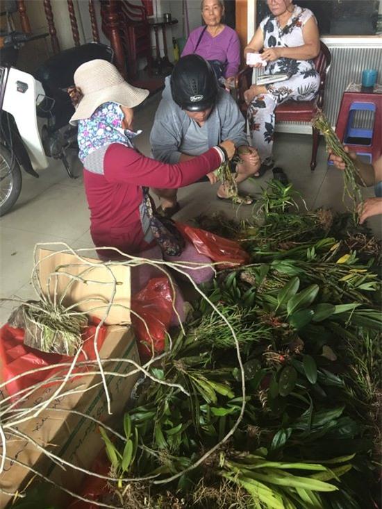 lan rừng, lan rừng quý hiếm, phong lan, hoa lan, chợ hoa, Đà Nẵng, lan quý