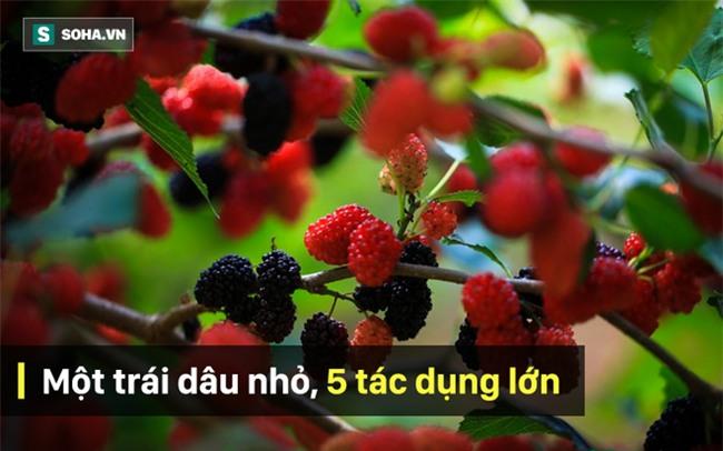 Vì sao Đông y gọi trái cây nhỏ xinh chua ngọt này là quả Thánh trong nhân gian? - Ảnh 1.