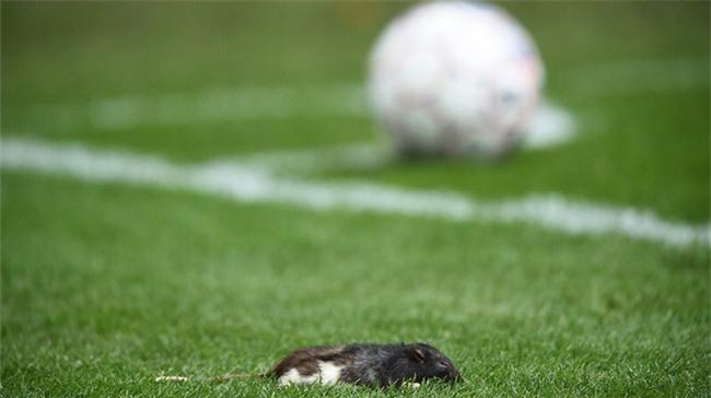 Fan chơi lầy, ném chuột chết vào cầu thủ đối phương - Ảnh 6.