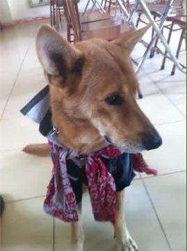 Bức ảnh còn lại của chú chó lao ra biển cứu chủ rồi biến mất khiến dân mạng rơi nước mắt - Ảnh 1.