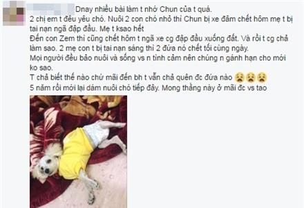 Bức ảnh còn lại của chú chó lao ra biển cứu chủ rồi biến mất khiến dân mạng rơi nước mắt - Ảnh 2.