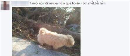 Bức ảnh còn lại của chú chó lao ra biển cứu chủ rồi biến mất khiến dân mạng rơi nước mắt - Ảnh 3.
