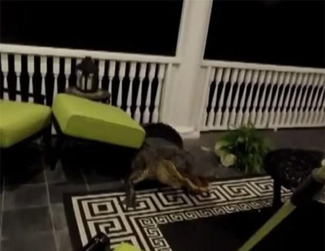 Ngủ dậy cả gia đình phát hoảng thấy cá sấu bò lên tận tầng 2 cắn phá - Ảnh 2.