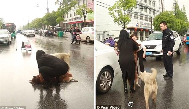 Chú chó túc trực bên cạnh, tuyệt vọng lay bạn bị xe đâm tỉnh lại khiến nhiều người cay mắt - Ảnh 4.