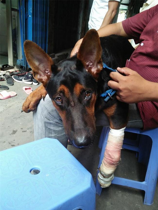 Sự trở về của chú chó và những vết thương trên mình gây ám ảnh dân mạng Việt  - Ảnh 4.
