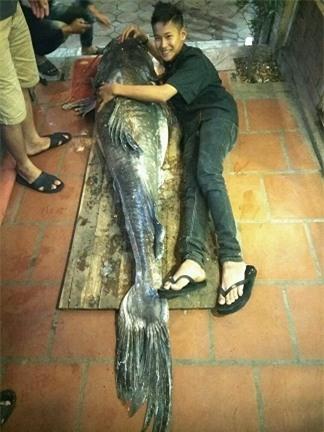 """""""Thủy quái"""" sông Mê Kông nặng 112kg xuất hiện ở Hà Nội - 3"""
