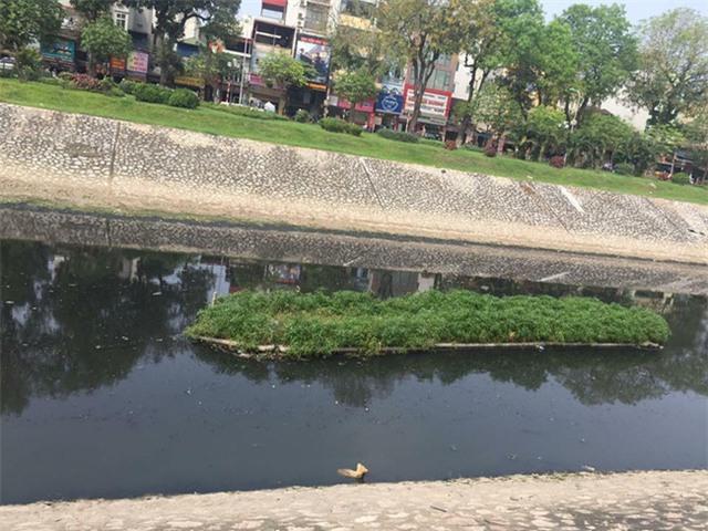Chú chó nhỏ bị chủ ném xuống sông Tô Lịch. Ảnh: Facebook
