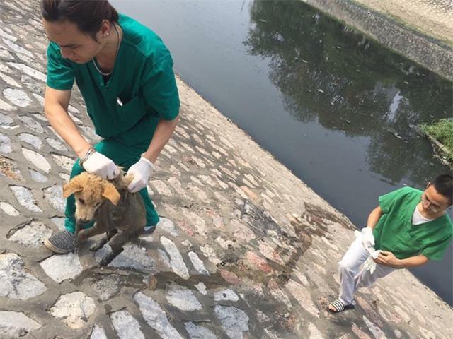 Rất may chú chó sau đó được một số nhân viên phòng khám vớt lên bờ kịp thời. Ảnh: Facebook