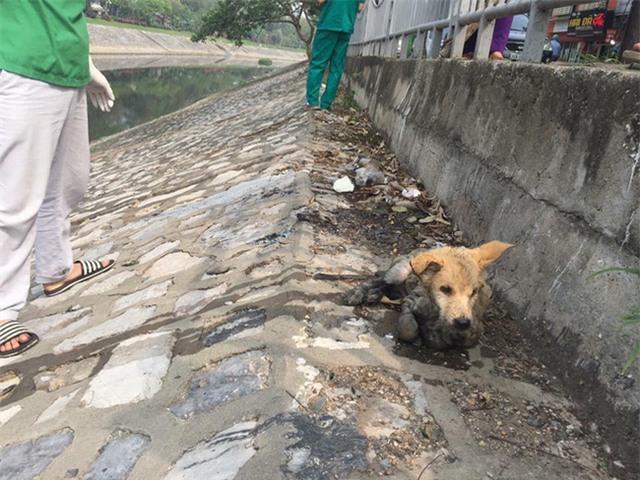 Nhiều người bày tỏ thương cảm trước hình ảnh chú chó đáng thương. Ảnh: Facebook