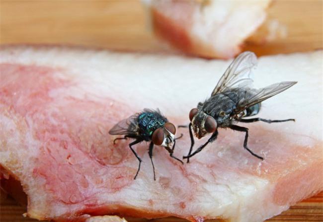"""Thấy ruồi đậu lên thức ăn cũng đừng """"điên tiết"""" xách cây đập mà bạn phải lập tức… - Ảnh 1."""