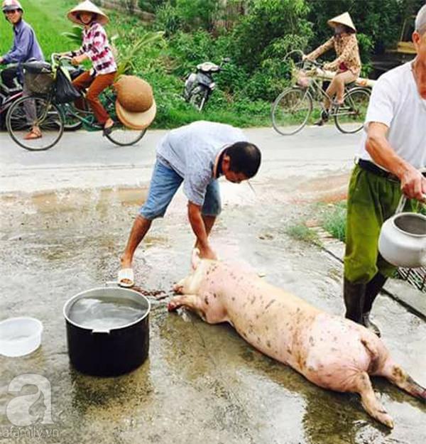 Người dân khắp nơi khoe ảnh giải cứu lợn cho người nông dân - Ảnh 3.