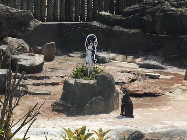 Phải lòng tấm bìa các tông, chú chim cánh cụt già bỏ ăn, chỉ ngơ ngẩn đứng ngắm người tình trong mộng - Ảnh 4.