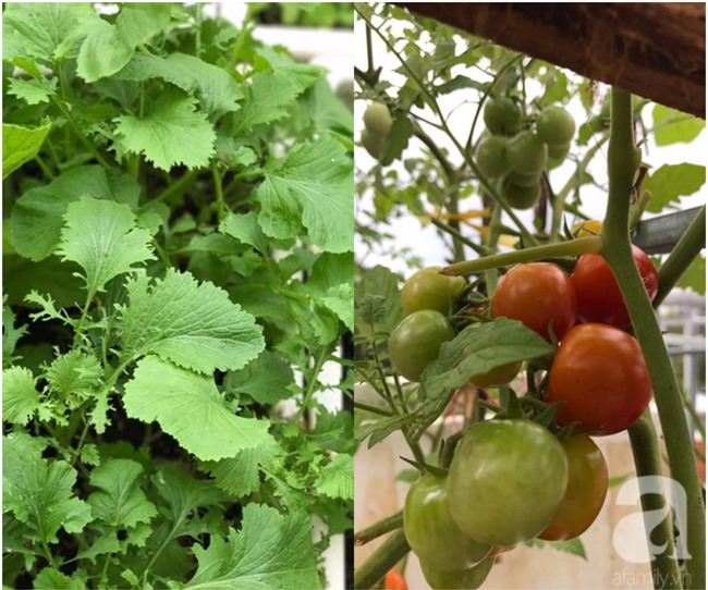 Sân thượng 10m² xanh mướt của bà mẹ dám bỏ sự nghiệp để ở nhà trồng rau, chăm con - Ảnh 12.