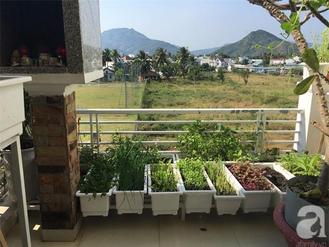 Sân thượng 10m² xanh mướt của bà mẹ dám bỏ sự nghiệp để ở nhà trồng rau, chăm con - Ảnh 4.