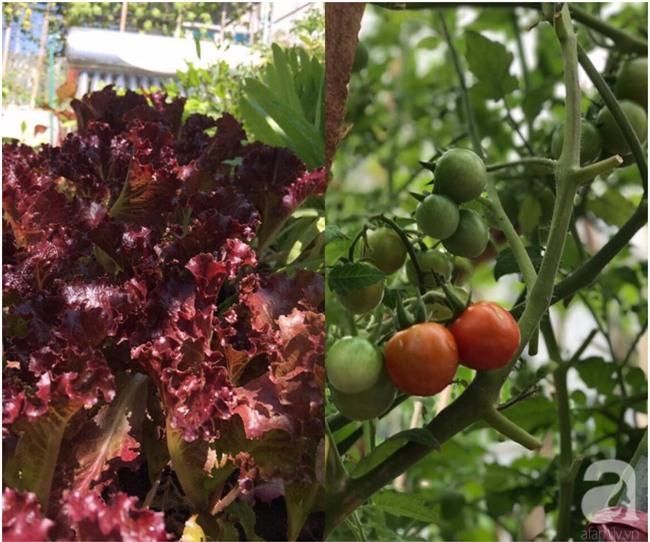 Sân thượng 10m² xanh mướt của bà mẹ dám bỏ sự nghiệp để ở nhà trồng rau, chăm con - Ảnh 6.