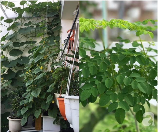 Sân thượng 10m² xanh mướt của bà mẹ dám bỏ sự nghiệp để ở nhà trồng rau, chăm con - Ảnh 9.