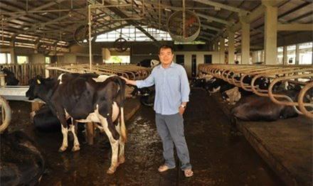 nuôi bò sữa, tỷ phú bò sữa, làm giàu,