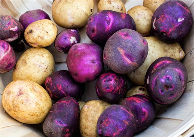 Rất nhiều bà nội trợ đang bảo quản khoai tây sai cách khiến chúng sinh ra chất gây ung thư - Ảnh 3.