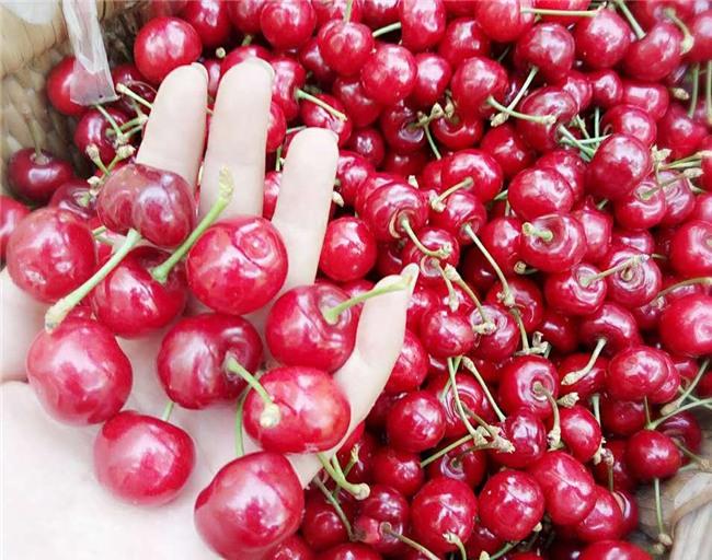 hoa quả trung quốc, hoa quả nhập khẩu, hoa quả giá rẻ, cherry,
