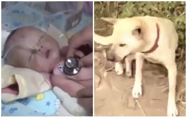 Thấy thú cưng điên cuồng đào bới đất, chủ nhân chạy ra và phát hiện bé trai 1 tháng tuổi bị chôn sống - Ảnh 2.