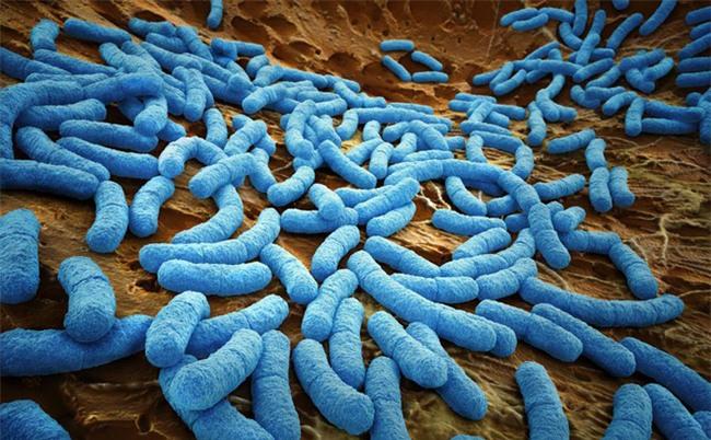 Những vị trí tưởng sạch nhưng chứa đầy vi khuẩn trong bếp nhà bạn - Ảnh 3.