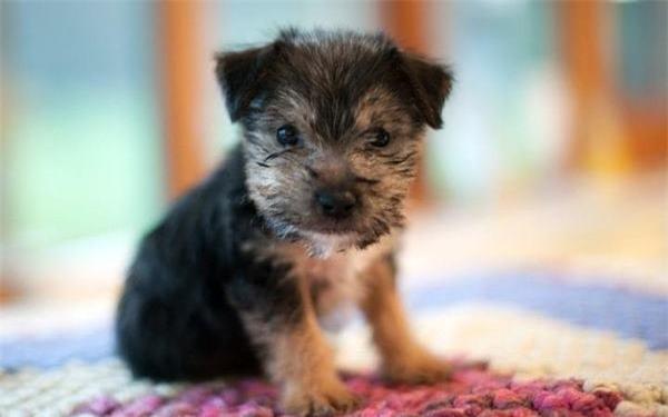 Nghiên cứu mới phát hiện khả năng đặc biệt của loài chó - 1